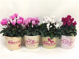 wholesale Mothers Day Ceramics with cyclamen